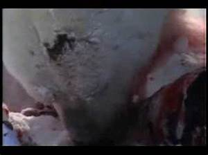 Polar Bear Attacks Ring Seal - National Geographic - YouTube