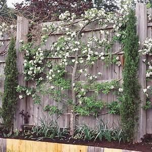 Schnell Wachsender Sichtschutz Immergrün : die besten 25 sichtschutz pflanzen immergr n ideen auf ~ Michelbontemps.com Haus und Dekorationen