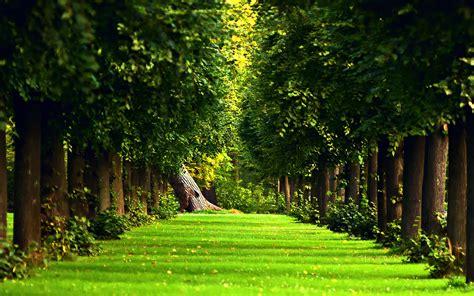 Beautiful Forest Wallpaper ·①