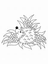 Coloring Hedgehog Pages Animal Animals Printable Print Templates Sketch Template sketch template