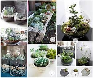 Pflanzen Für Terrarium : diy sukkulenten terrarium ~ Orissabook.com Haus und Dekorationen
