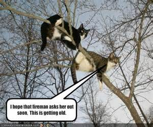 cat stuck in tree riot kitty august 2011