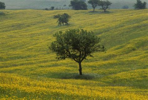 Der Garten Ista by B B Bedda Ista Baia Sardinia Ferien In Sardinien