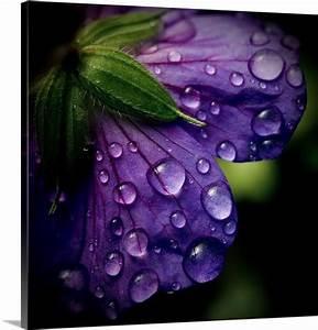Purple Flower & water drops | Purple | Pinterest
