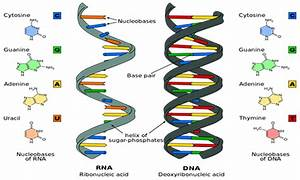 Ten Key Facts About Nucleic Acid