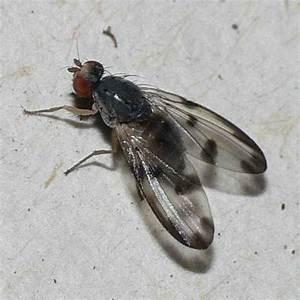 Mini Fliegen Am Fenster : kleine fliegen blumenerde kleine fliegen im blumentopf und blumenerde bek mpfen ~ Eleganceandgraceweddings.com Haus und Dekorationen