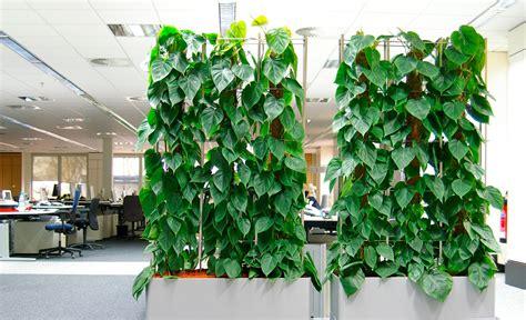 pflanzen als raumteiler paravent bilder ideen
