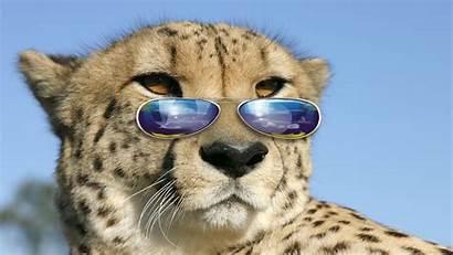 Cool Cat Desktop Resolutions Wide