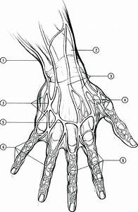 Diagram  Hand Joints Diagram