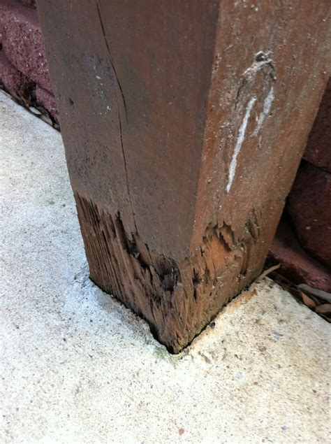 termite damage   deck post archives slug  bug
