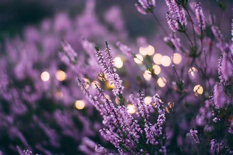 sueno blog archive aromatherapy    nights