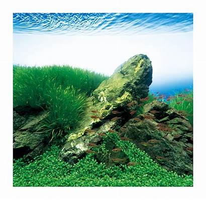 Ada Nature Aqua Aquarium Japan Miyabi Na