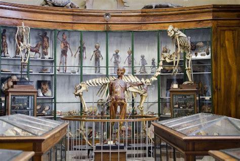 bureau des douanes montpellier conservatoire d 39 anatomie université de montpellier