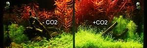 Co2 Rechner Aquarium : pflanzenaquarium mit und ohne co2 im zeitraffer ~ A.2002-acura-tl-radio.info Haus und Dekorationen