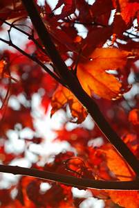 Schöne Herbstbilder Kostenlos : herbstfotos 5 tipps f r kreative und sch ne herbstbilder ~ A.2002-acura-tl-radio.info Haus und Dekorationen