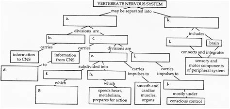 Nervous System Concept Map Answers. Graphic Design Business Ideas. Technical Schools Atlanta Yelp Santa Barbara. Europa City Hotel Berlin Bmw 3 Series Interior. Interest Rates Predictions Order Dish Movies. Online Veterinarian Colleges 2 Vessel Cord. How Much Does Hair Laser Removal Cost. Which Toothpaste Really Whitens Teeth. Cheapest Online University Per Credit Hour