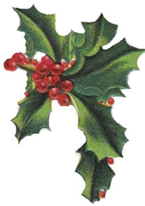 christmas clipart vintage holly