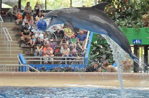 brookfield zoo zoo  chicago thousand wonders