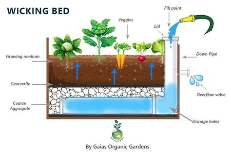 how to make a water bed how to make a wicking bed gaias organic gardens