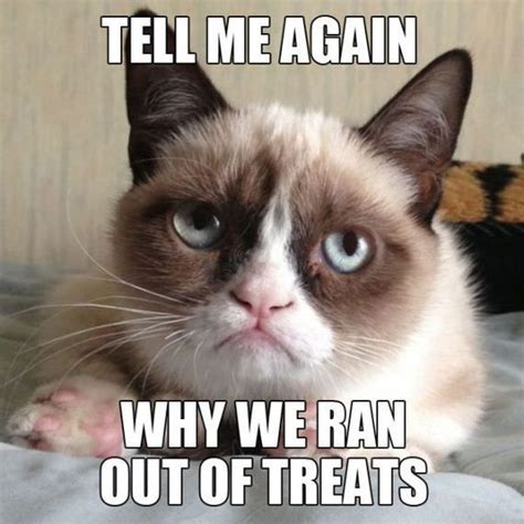 Tard The Cat Meme - tard the grumpy cat humor pinterest