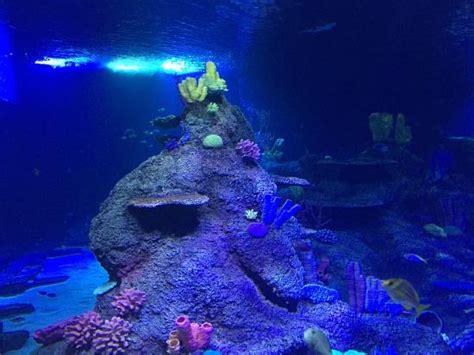 sea aquarium entrance fee skegness photo0 jpg picture of skegness aquarium skegness tripadvisor