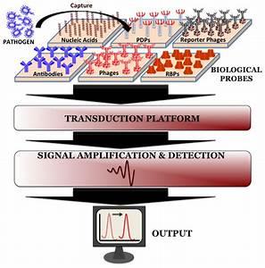 Sensors | Free Full-Text | Recent Advances in ...