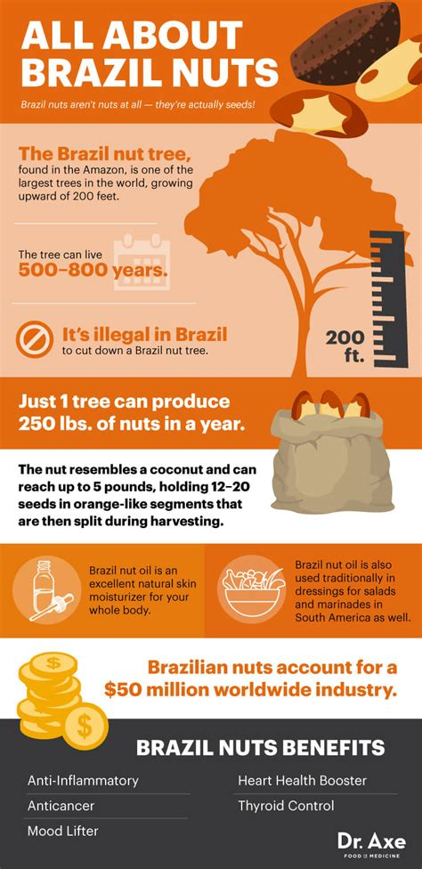 Brazil Nuts: The Top Selenium Food that Fights