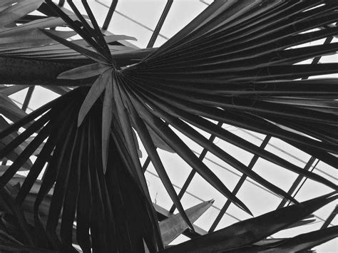 palm trees tumblr black and white91 and