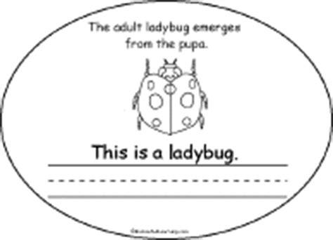 life cycle   ladybug book  printable book