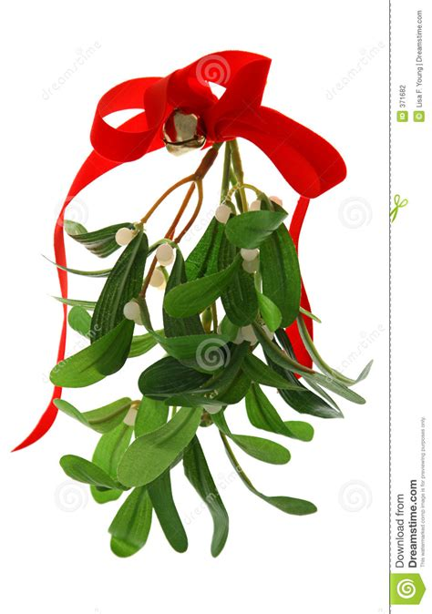 mistletoe is a tradition for christmas mistletoe isolated stock photography image 371682