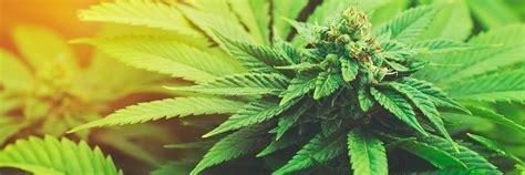 aha tipps infos fuer junge leute cannabis marihuana