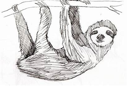 Sloth Sketches Animation Character Illustration Maylin Andrew