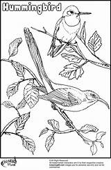 Hummingbird Coloring Pages Bird Hummingbirds Humming Birds Printable Flowers Para Colorear Dibujos Books Getcoloringpages Popular Open sketch template