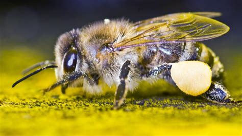 Bienenammen Im Dauereinsatz Nachwuchs Verstellt Innere