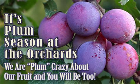 Peters Orchards