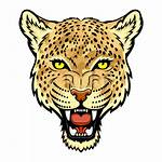 Jaguar Clipart Face Animal Mammal Transparent Webstockreview