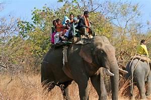 De safari en India: parques nacionales de India