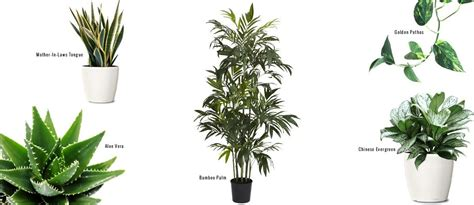 187 the clean life 15 air purifying indoor plants home