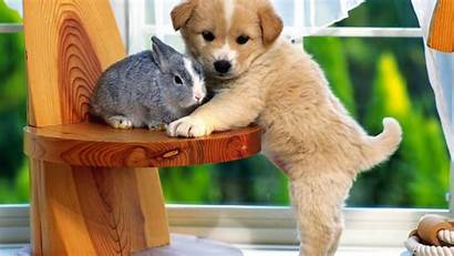 Puppies Wallpapers Puppy Very Dogs Dog Adorable