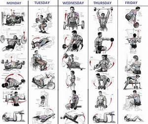 Best Bodybuilding Workout Plan