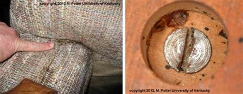 types of beds used in hotels bed bugs entomology