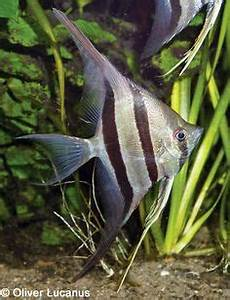 1000 images about Nature Fish on Pinterest