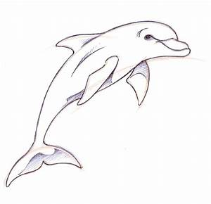 How to Draw a Dolphin Step By Step | Doodles Made into Art ...