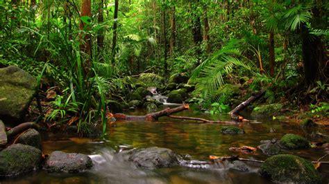 Rainforest Animals Wallpaper - forest wallpapers wallpaper cave