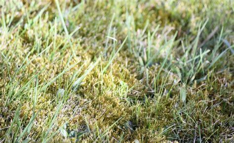 Moos Im Rasen Bekaempfen by Moos Im Rasen Erfolgreich Bek 228 Mpfen Gartentipps Lawn