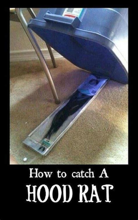 Hood Rat Meme - how to trap a hood rat funny af pinterest rats lol and hoods
