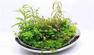 Pflanzen Terrarium Einrichten : wabi kusa anleitung pflanzen terrarium ~ Orissabook.com Haus und Dekorationen