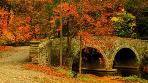 Nature road leaves trees forest park bridge colorful path