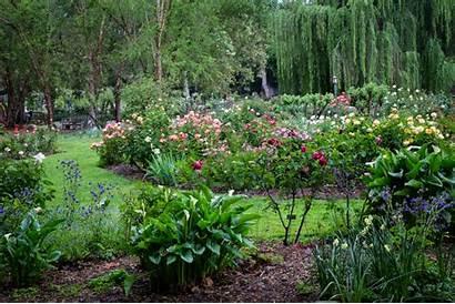 Garden Rose Gardens Descanso Danielle Collections