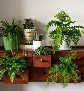 STYLE / House Plants – BY BETHANY